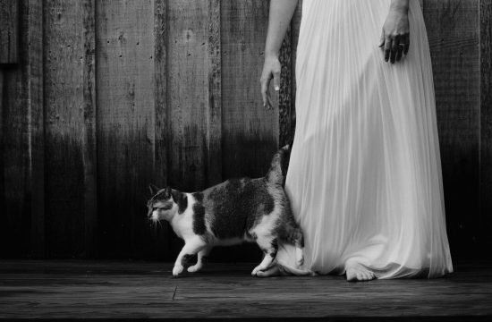 knee down of a woman in a wedding dress reaching to pet a tortoiseshell cat walking by against a rustic Kentucky cabin